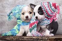 狗狗冬天怎么保暖呢?