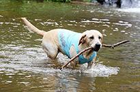 狗狗的四季护理知识